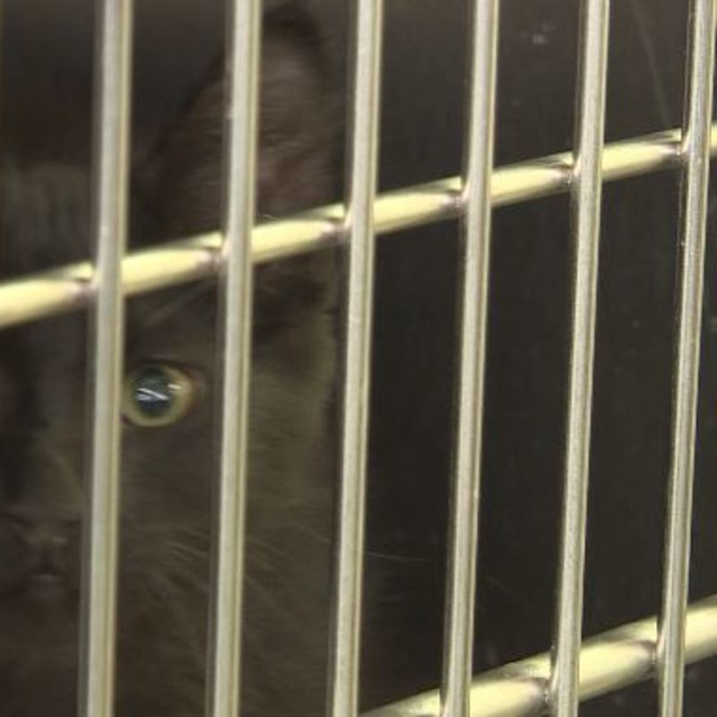 Pets From Paradise S Campfire In Need Of Loving Homes Ktvl